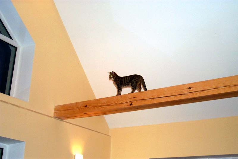 Cat on a wooden beam under the ceiling
