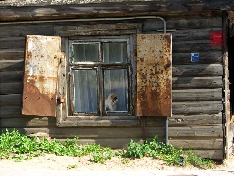A cat in the window of an old house in Uzupis with rusting shutters, September 2005.