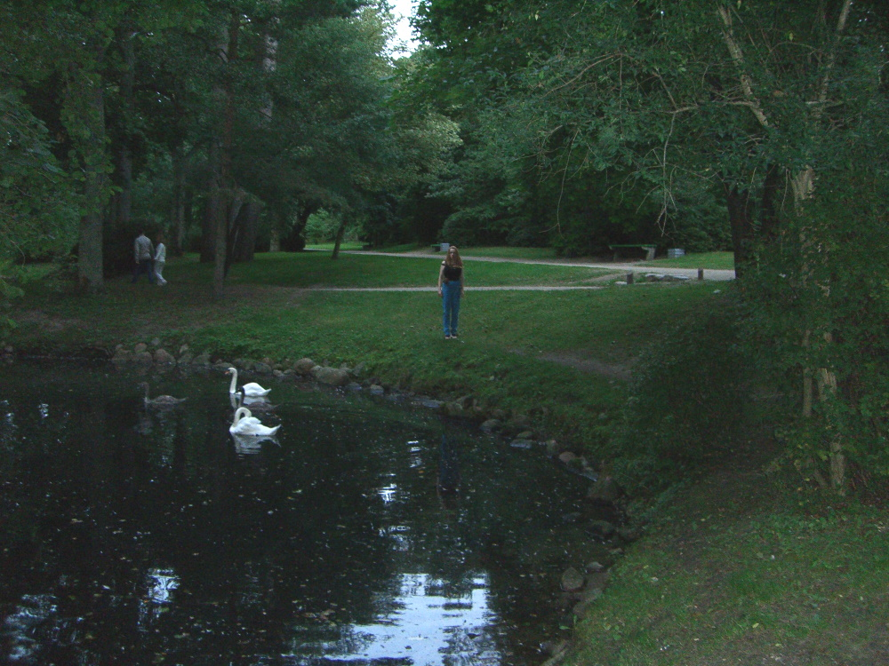 Palanga park with a pond and swans