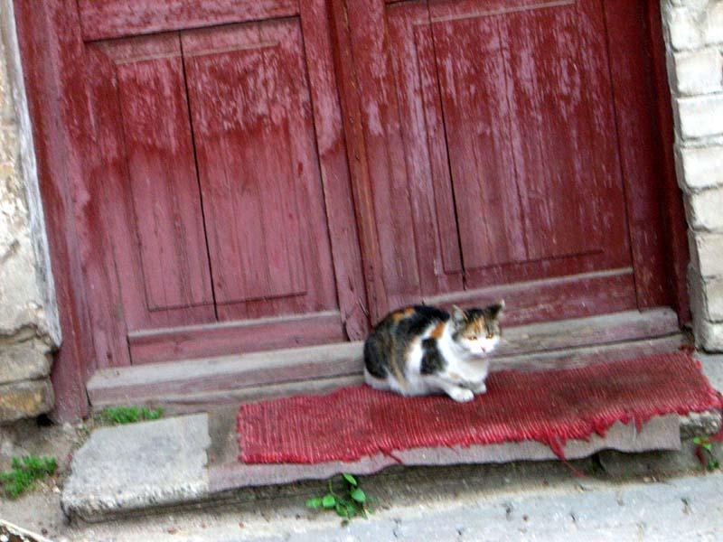 A cat on Pilies street