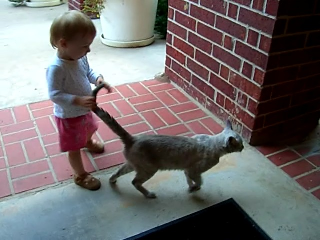 The cat almost lets E grab its tail