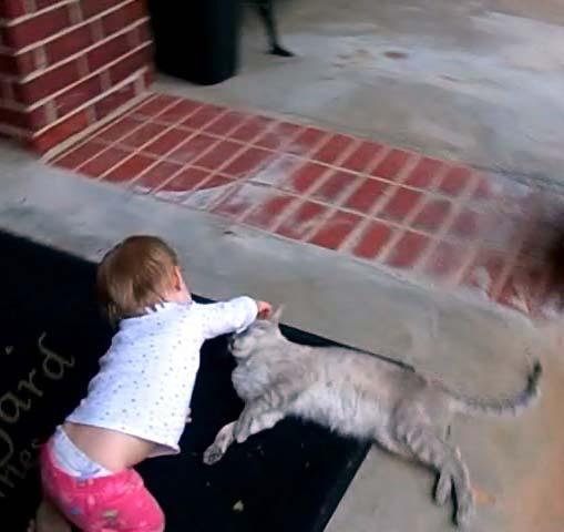 Cat lets E grab its ears